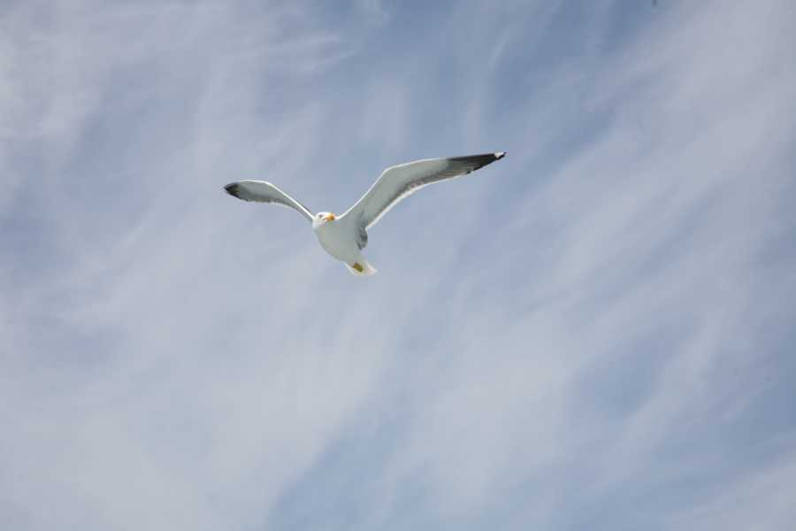 Birdreduc
