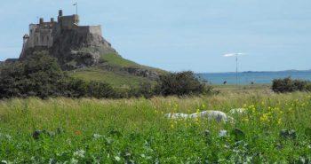 Lindisfarne_2009_024red2