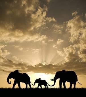 crbst_elephants10